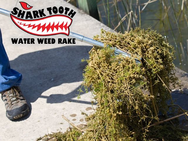 Shark Tooth Water Weed Rake